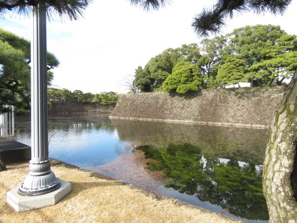 ヨシガモの生息地 皇居