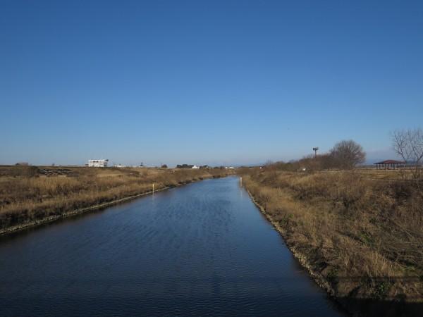 ベニマシコの生息地 渡良瀬遊水地