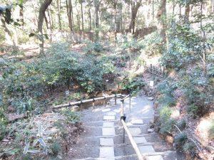 キビタキの生息地 明治神宮