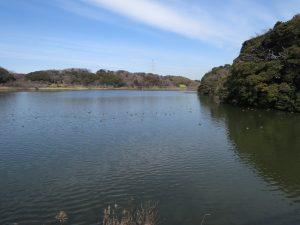 アメリカヒドリの生息地 袖ヶ浦公園