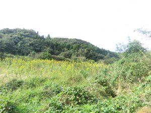 袖ヶ浦公園で見られる野鳥 花見広場奥