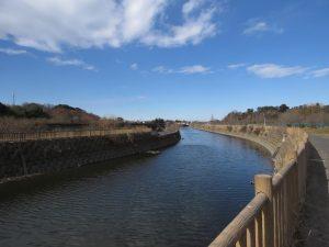 清水公園の野鳥 座生川