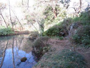 清水公園の野鳥 もみじ谷