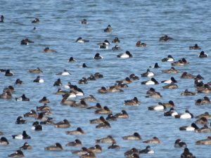 富津岬の野鳥