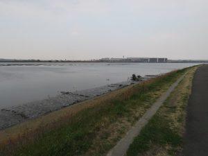 コチドリの生息地 多摩川河口付近