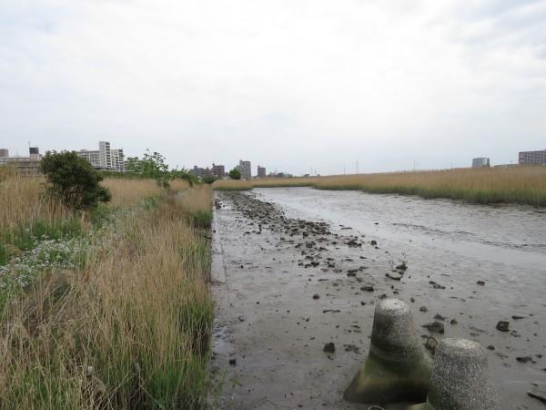 多摩川六郷橋緑地で見られる野鳥と観察ポイント