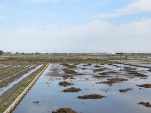 ムナグロの生息地 稲敷