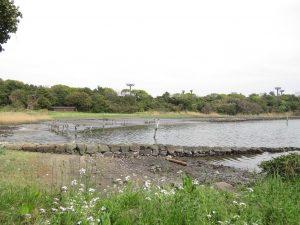 キョウジョシギの生息地 大井ふ頭中央海浜公園