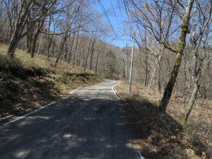 柳沢峠 オオアカゲラの生息地と探す際のポイント