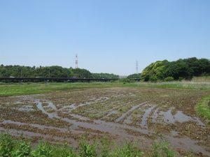 田んぼ 北総花の丘公園