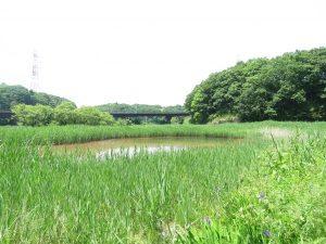 自然生態園 北総花の丘公園