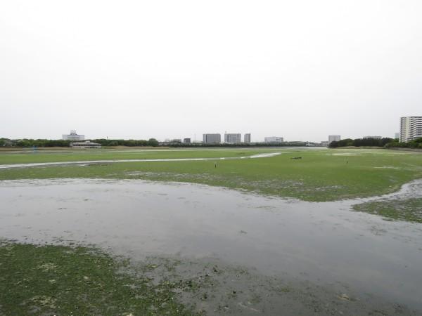キアシシギの生息地 谷津干潟
