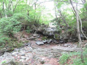 イカルの生息地 栃木県民の森