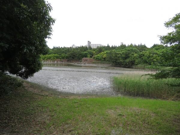 渡りの夏鳥 東京都 探鳥地 葛西臨海公園