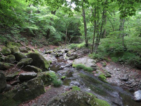 栃木県民の森 カワガラス