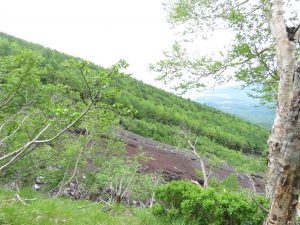 夏の富士山おすすめ探鳥地 富士山富士宮口五合目