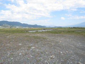 セッカの生息地 富士川河口