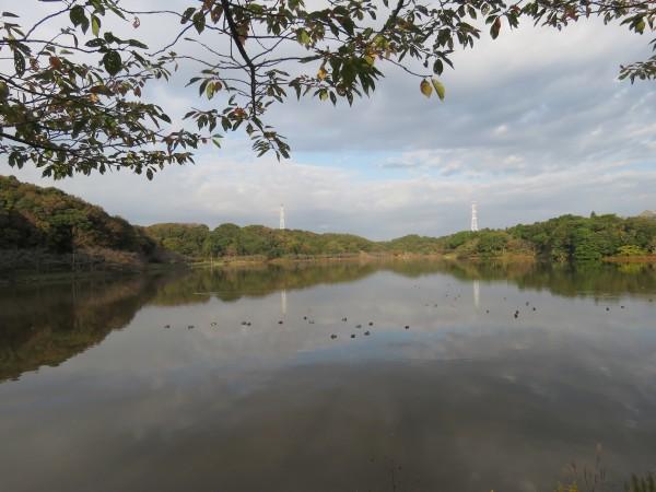 袖ヶ浦公園で見られる野鳥と観察ポイント 上池