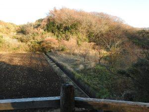 神奈川県のカワセミ 舞岡公園