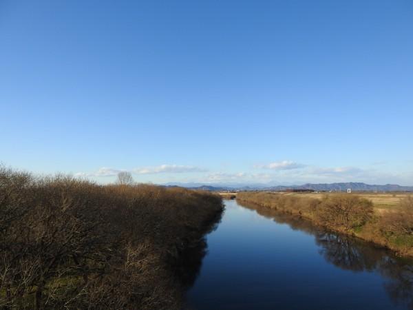 オナガの生息地 渡良瀬油水地