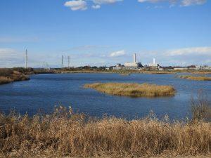 アカゲラの生息地 芝川第一調節池