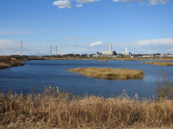 アリスイの生息地 芝川第一調節池