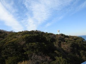 観音崎公園で見られる野鳥と観察ポイント 上空