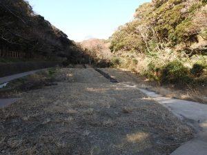 観音崎公園の野鳥 斜面林
