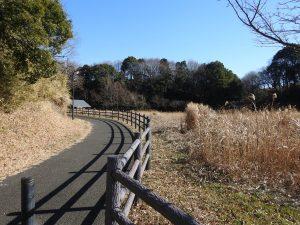 シロハラの生息地 北総花の丘公園