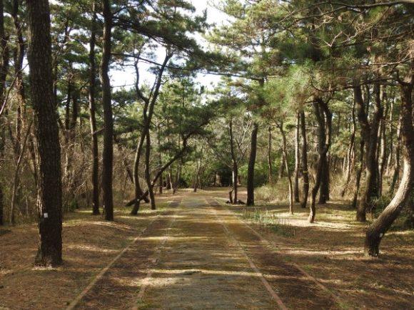 富津岬で見られる野鳥 林