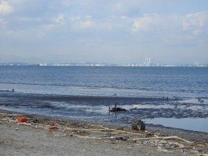 富津岬で見られる野鳥 干潟 砂浜