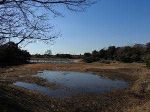 カモ類などの水鳥観察におすすめの探鳥地 葛西臨海公園