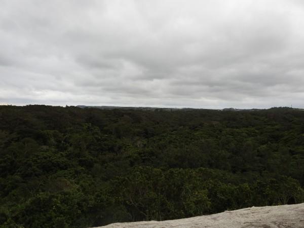 展望台からの眺め 大野山林
