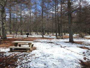 戦場ヶ原で見られる野鳥と観察ポイント 三本松園地