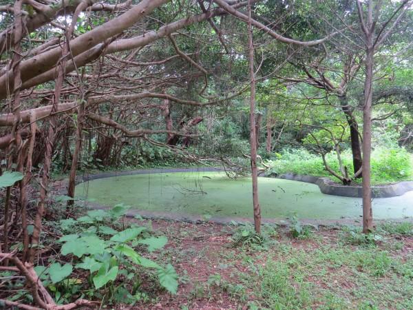 池 大野山林