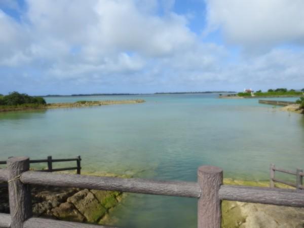イソヒヨドリの生息地 宮古島