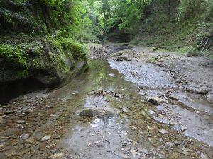 梅ヶ瀬渓谷 ヤブサメ