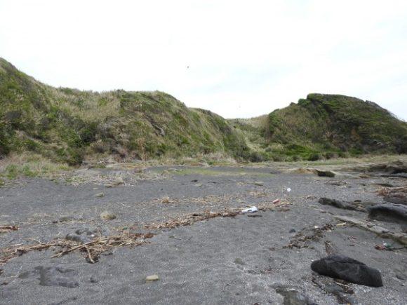 城ヶ島で見られる野鳥と観察ポイント