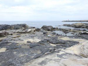イワツバメの生息地 城ヶ島