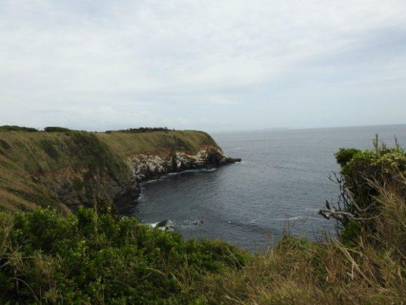 ハヤブサが見られる生息地 城ヶ島