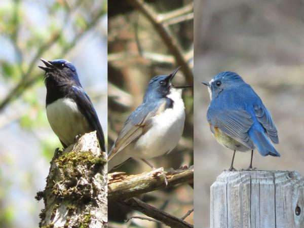 児童心理治療施設 青い鳥ぐんま|社会福祉法人 希 …