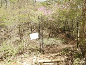 コルリの生息地 井戸湿原