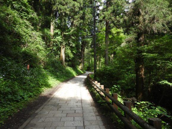 高尾山で見られる野鳥と観察ポイント