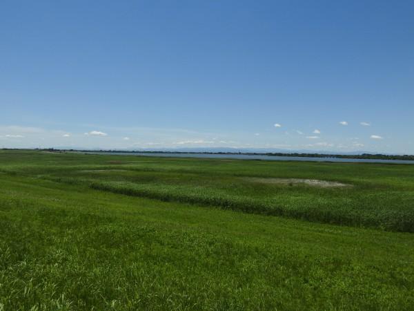 オオヨシキリの生息地 渡良瀬遊水地