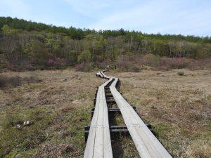 井戸湿原で見られる野鳥 井戸湿原