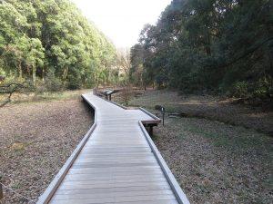 シメの生息地 東高根森林公園