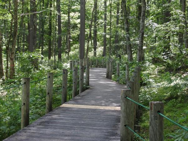 戸隠森林植物園 コサメビタキ