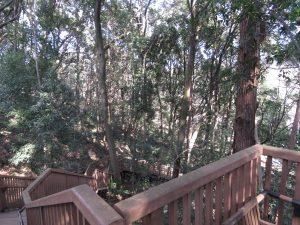 トラツグミの生息地 東高根森林公園