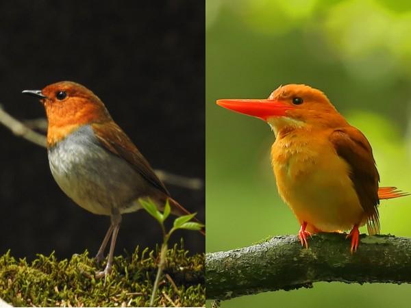 この夏に観察したい人気の夏鳥