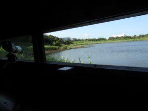 キョウジョシギの生息地 東京港野鳥公園